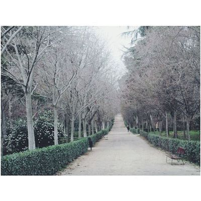 Parque del Retiro, Madrid. Madrid Total_madrid Madridgram Anonymous_es Ok_madrid Ok_spain Espacio_spain Loves_madrid Madrid_monumental Themadridbible Ig_madrid_city Estaes_madrid Themadridbible Madrid_monumental Igerseurope Nature Winter Travel Tripnatics Peoplescreatives Majesticsquares Minimalist Architecture Garden