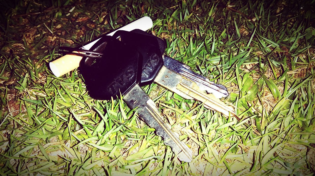 Grass Outdoors Keys Photography Biker