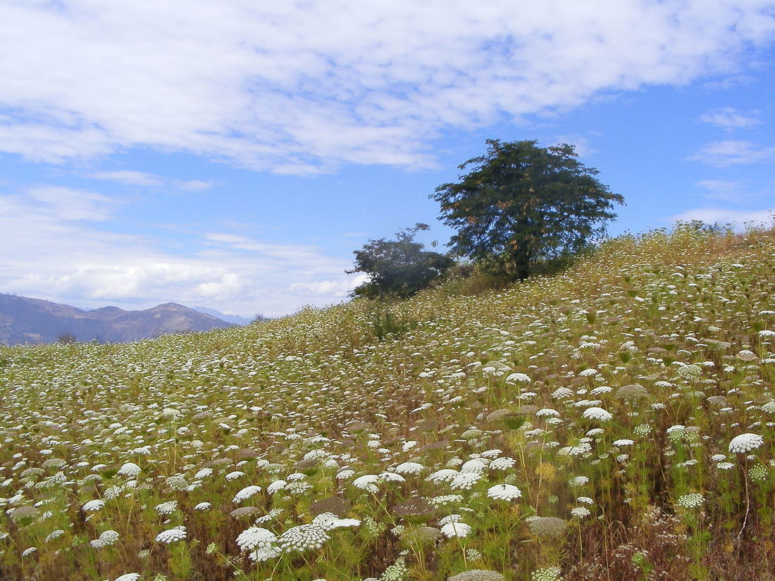 Kuntur Wasi, Cajamarca Flower Collection Flower Bed Flower Field Flowers And Sky Flowers And Trees Nature Photography Nature_collection Flowers, Nature And Beauty Flowers Of EyeEm Flowers And Mountains No People Outdoors Outdoor Photography