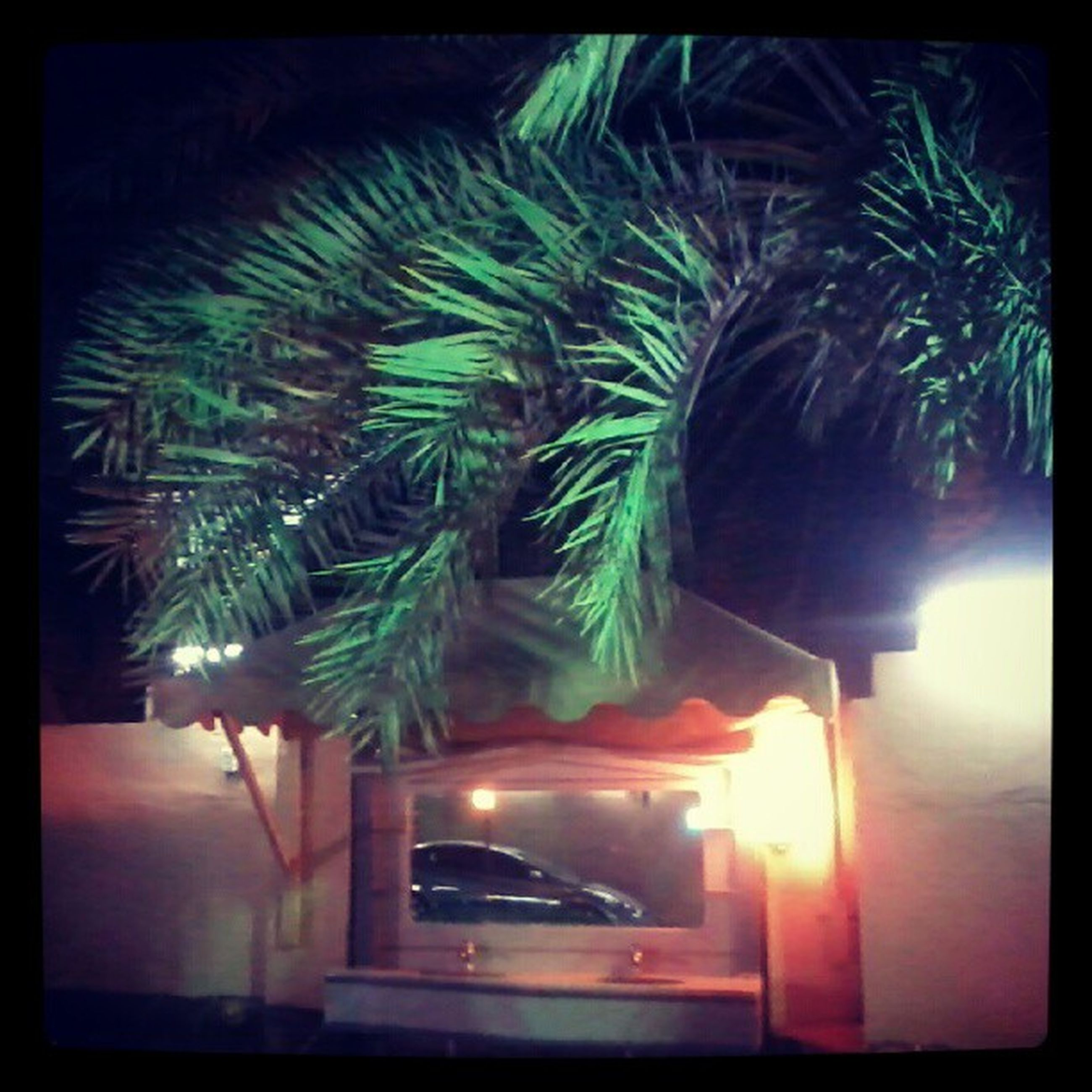 transfer print, auto post production filter, illuminated, night, palm tree, growth, tree, no people, building exterior, built structure, transportation, outdoors, architecture, high angle view, green color, light - natural phenomenon, car, nature, motion