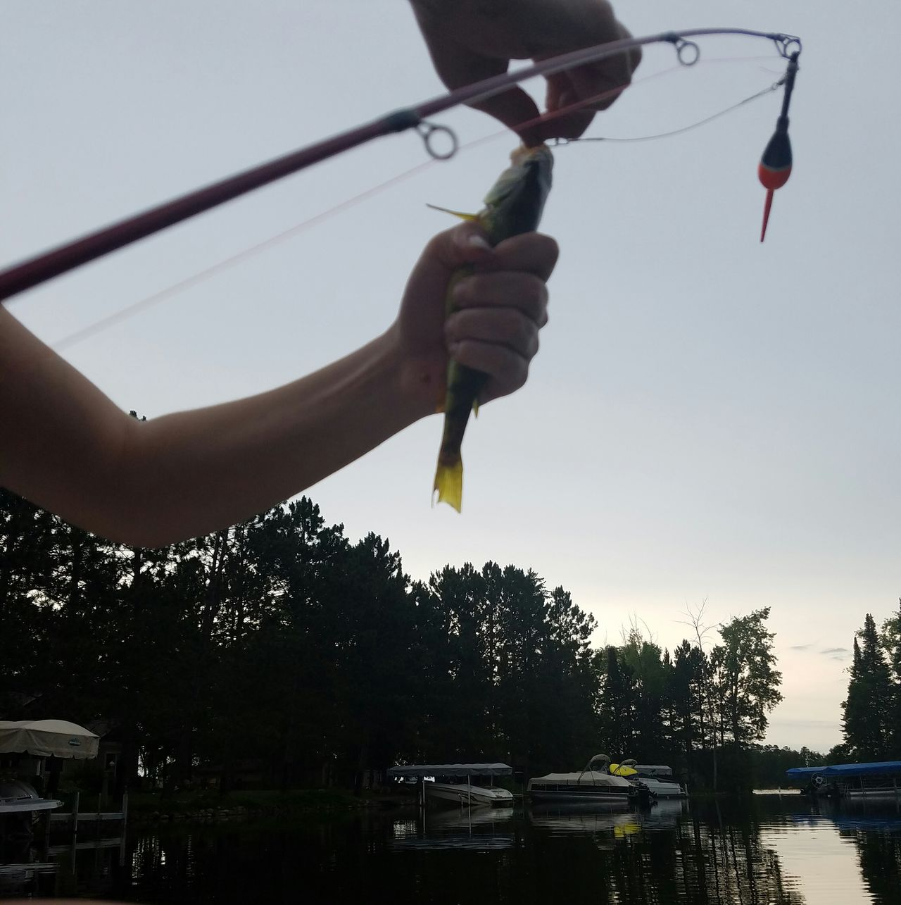 Crosslake, Minnesota Fishing Here Fishy Fishy Perch Rod And Reel Slimy Hook Line And Sinker