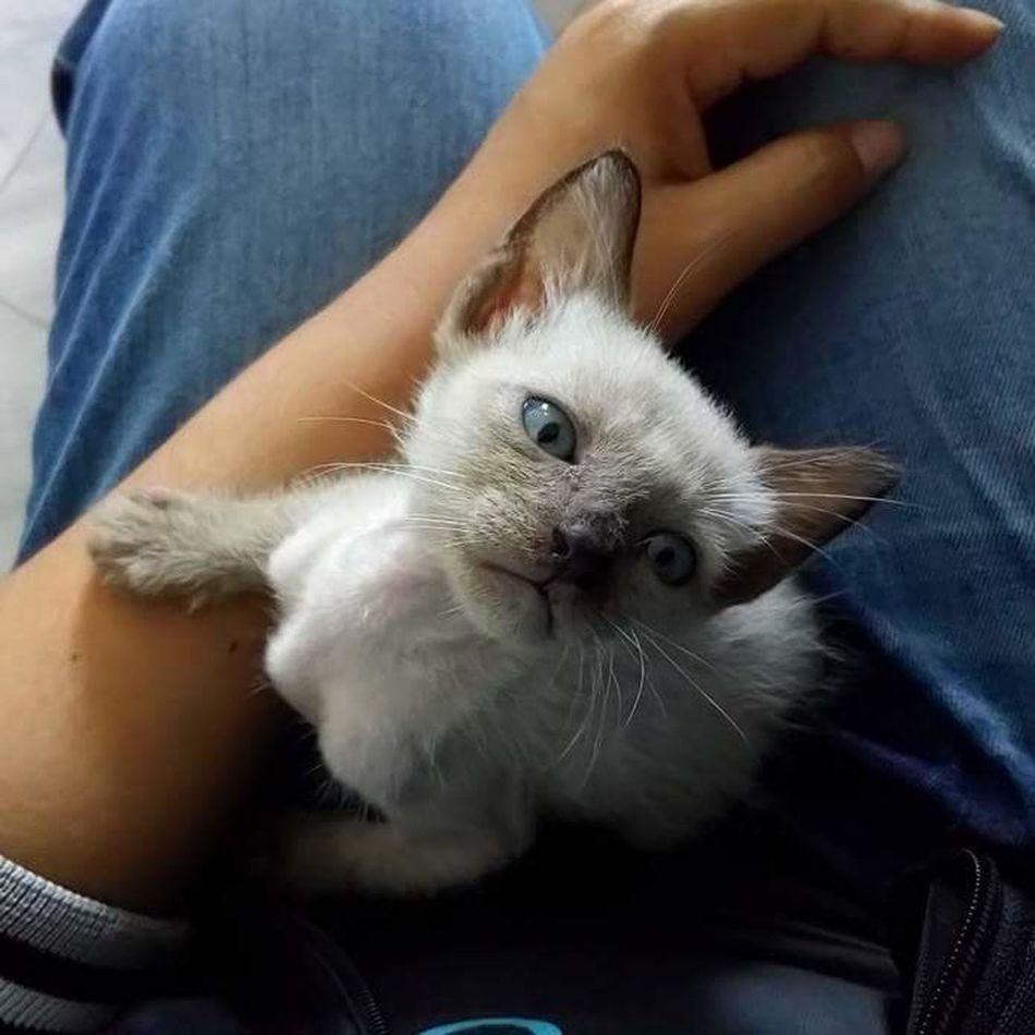 Cat♡ Lonely Cat Ilovecat