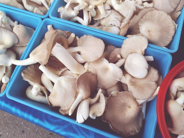 Fresh oyster mushroom on sale in traditional market in Kuantan, Malaysia. No People Business Finance And Industry Market Close-up Day Mushrooms 🍄🍄 Kulat Cendawan Vegetable Fresh Healthy Organic Food Textured  Agriculture
