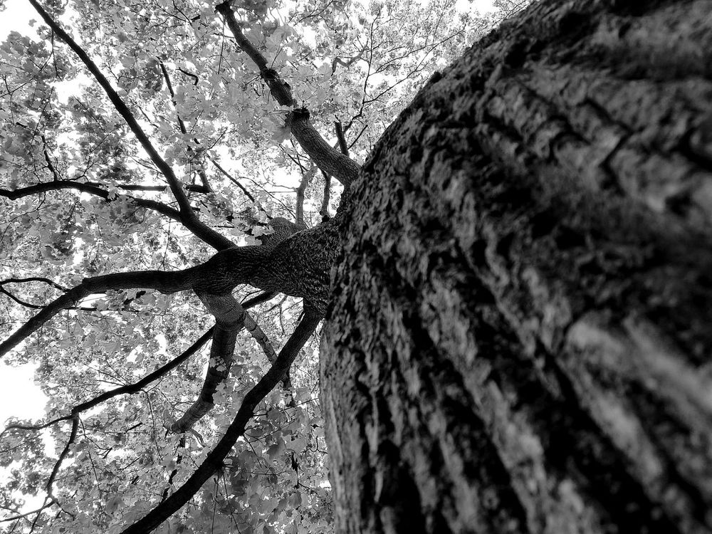 Tree Under Low Angle View No People Oben Long Goodbye EyeEmNewHere