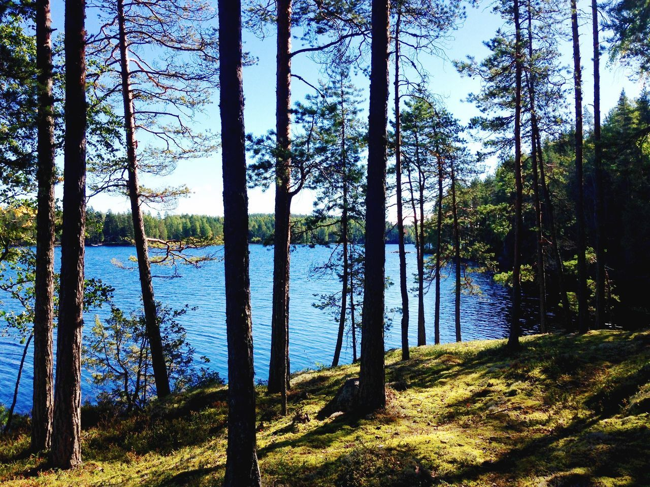 Wald + See. Nature Finland Tree Water Lake Landscape Forest Scenics Beauty In Nature No People Outdoors Day Tranquility Beautiful Detail Tree Sky Green Blue Light And Shadow Alone Alone Time Paradise Finland Summer Finlandia
