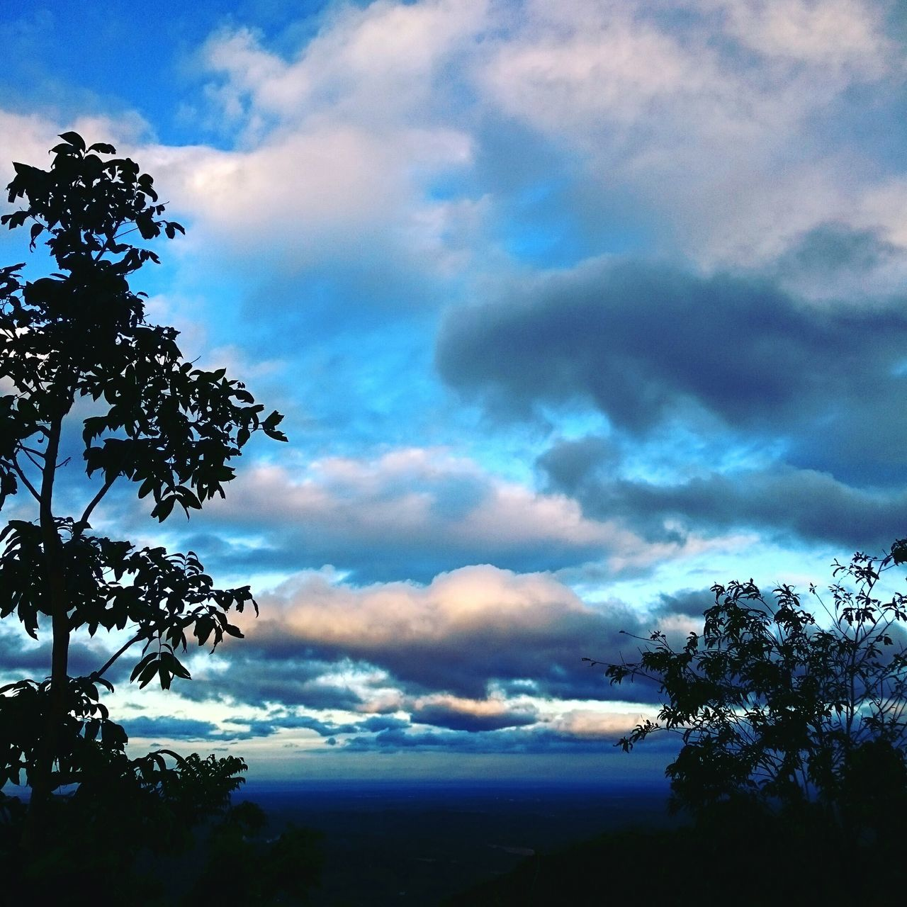 sky, cloud - sky, tree, nature, beauty in nature, scenics, no people, tranquil scene, tranquility, outdoors, day, low angle view, growth, storm cloud