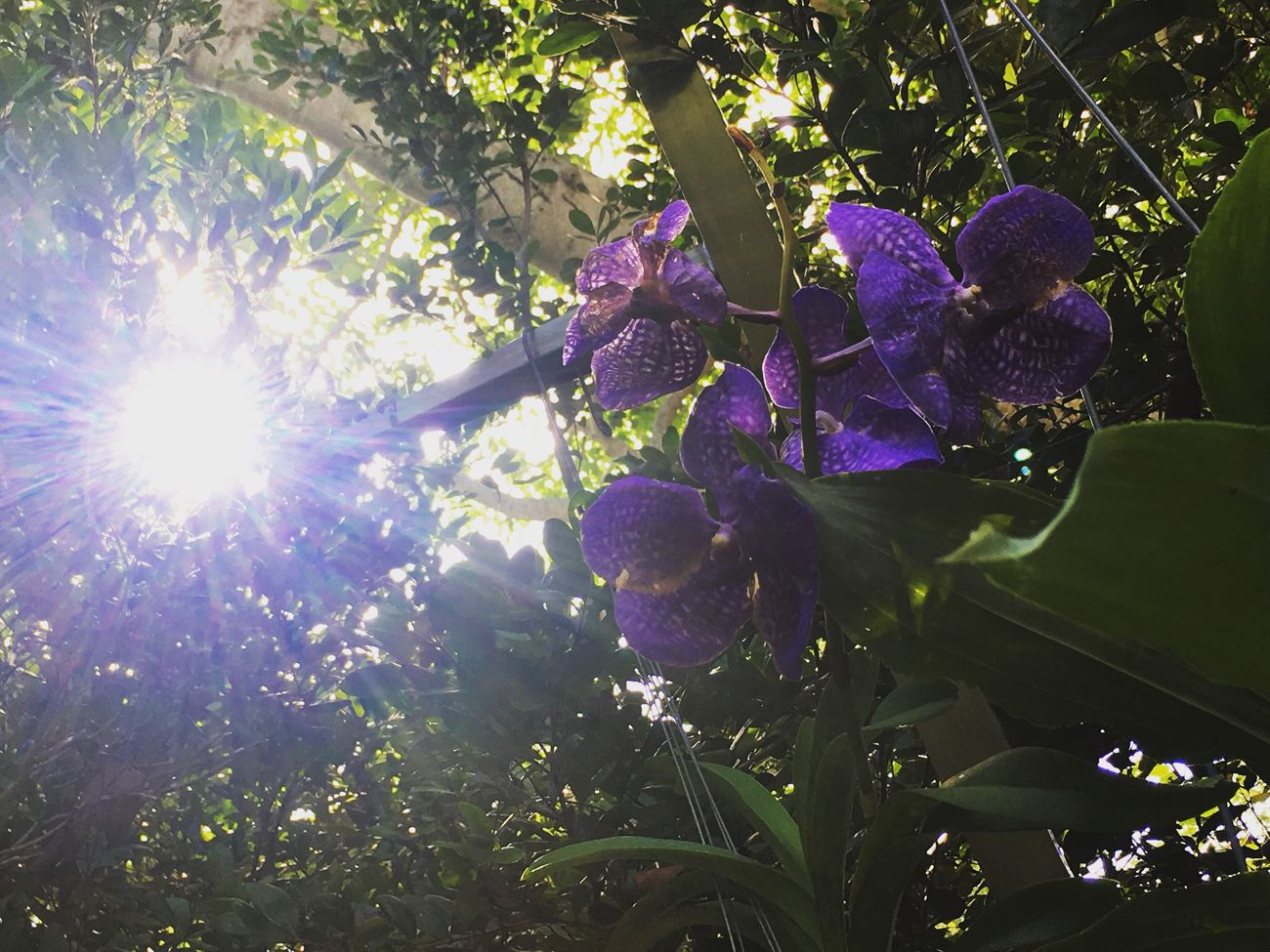Look for beauty in everything Flower Orchid Vizcaya Nature Plant Sunbeam Beauty In Nature Sun