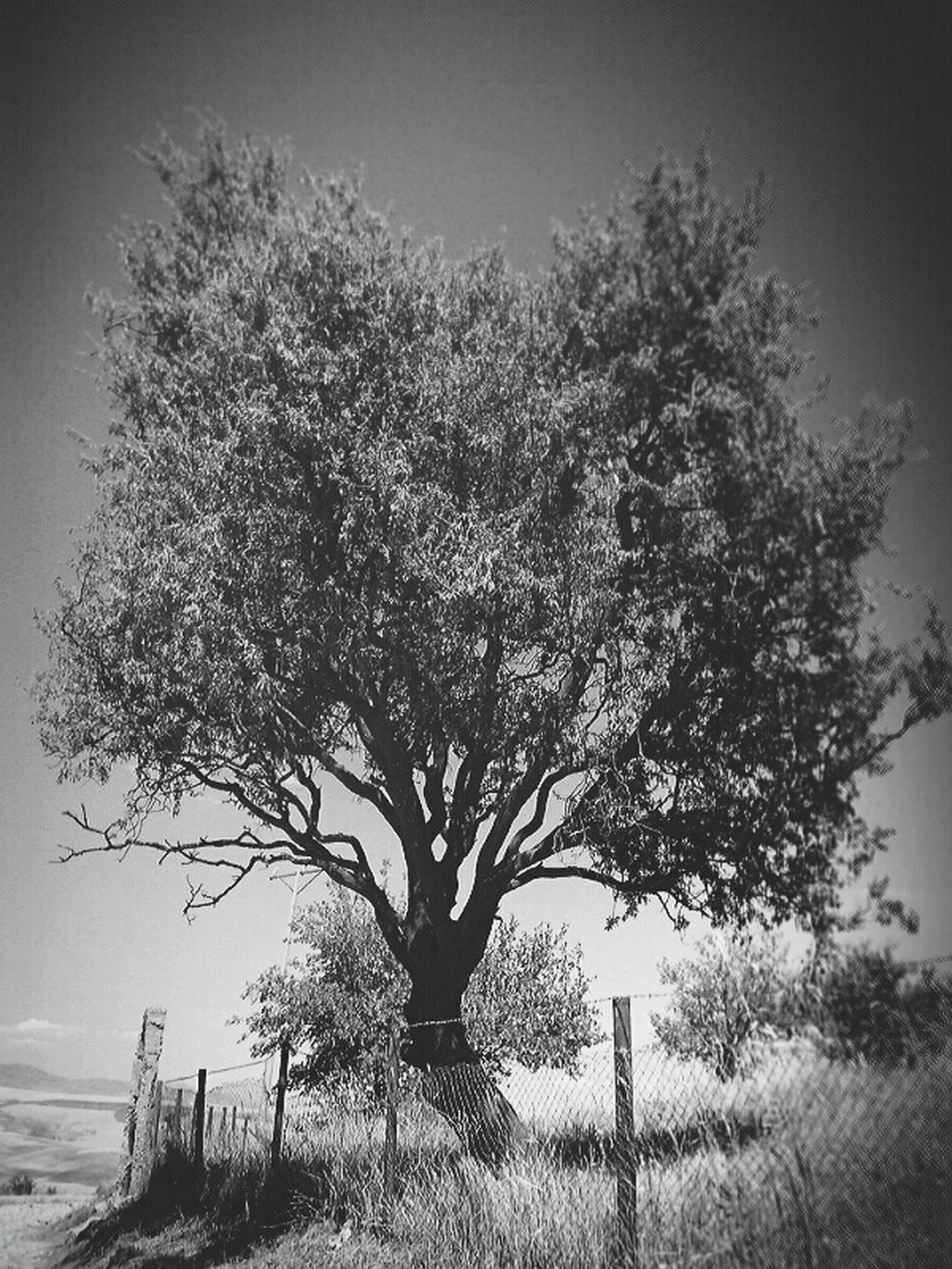 Köydenmanazaralar Mezarlık Agac Tree Relaxing Streetphotography Siyahbeyaz EyeEm BlackandWhite Mobile Photography Life