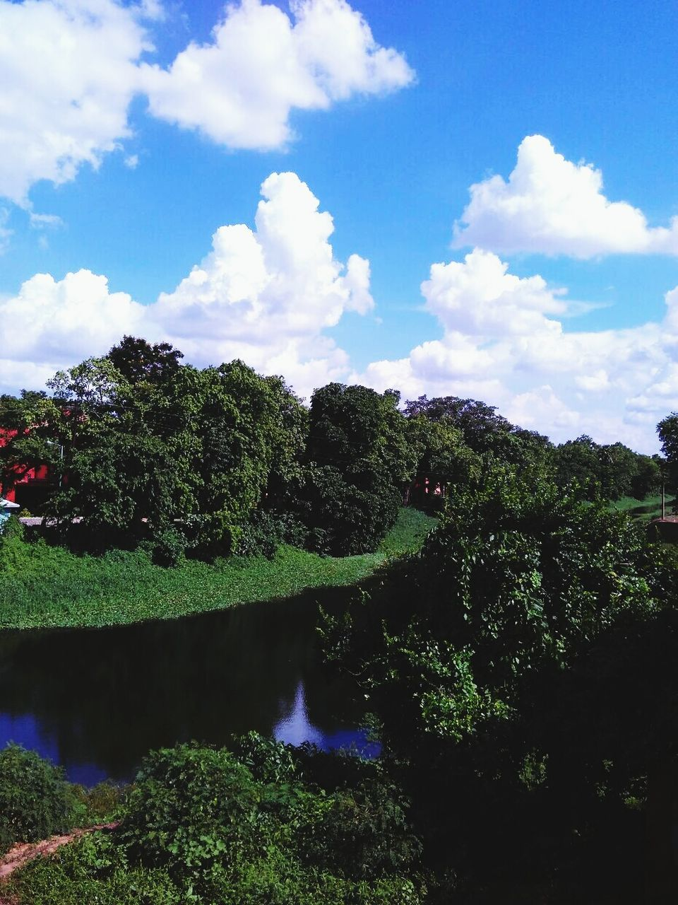 sky, tree, growth, nature, cloud - sky, beauty in nature, tranquility, water, outdoors, scenics, day, no people