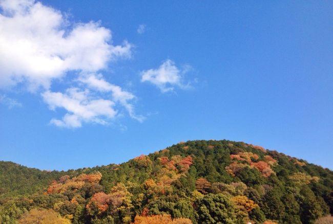 気持ちのいいお天気でした(^-^) Walking Around Autumn Colors