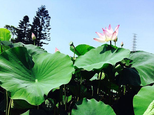 Check This Out Hanging Out Hello World Relaxing Enjoying Life Taking Photos Taoyuan Taiwan Beautiful Summer ☀☀☀