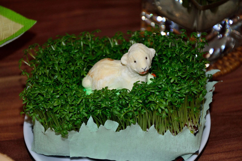 Easter Easter Decoration Easter Lamb Green Color Indoors  No People