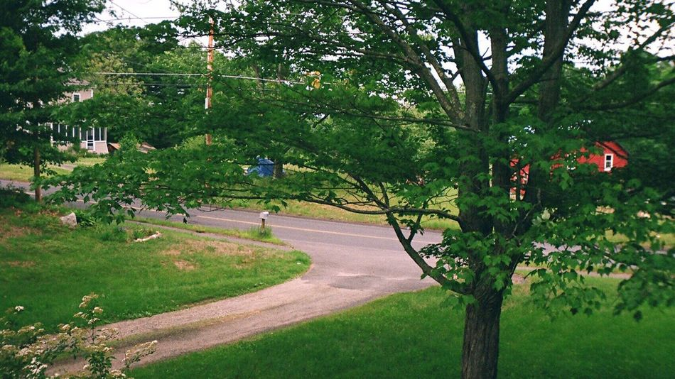 Koduckgirl Tree Nature Outdoors Sprocket Rocket Panorama Film Country Life Road