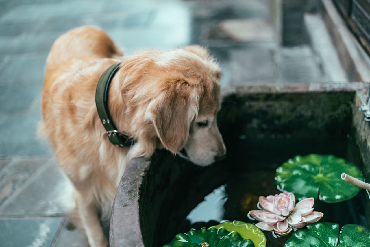 Traveling photography-- the world of dog My Street Photography My Traveling Photography Streetphotography Streetphotographer Focus On Foreground Animal Themes Dog Pets Mammal Standing Flower Zoology Outdoors No People EyeEm Best Shots Taking Photos Eyeemphoto Love Dog