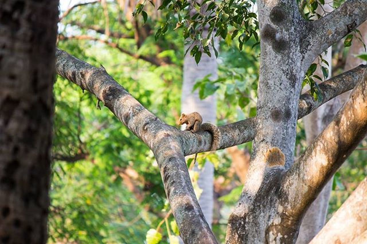 tree, mammal, animals in the wild, one animal, tree trunk, animal themes, animal wildlife, branch, no people, nature, animal, day, climbing, monkey, outdoors, relaxation, feline, beauty in nature