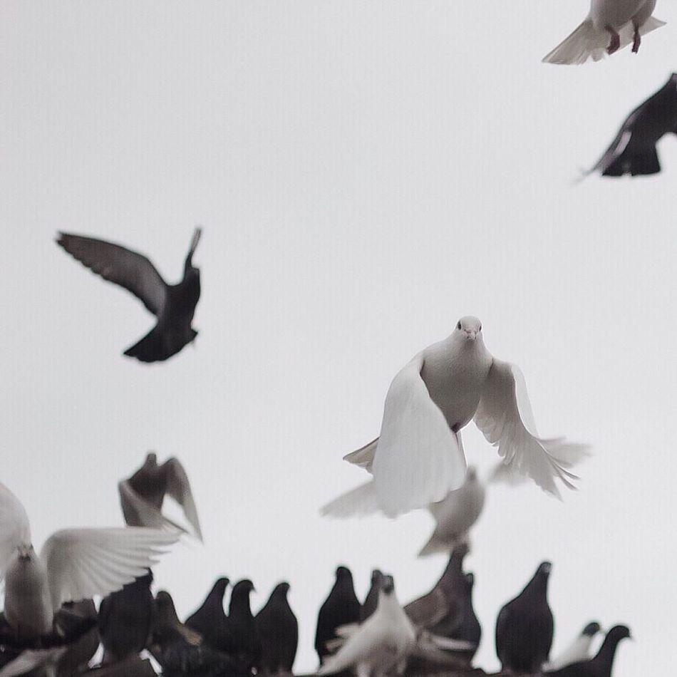 Some good old day (6) Showcase: February VSCO Birds Nature