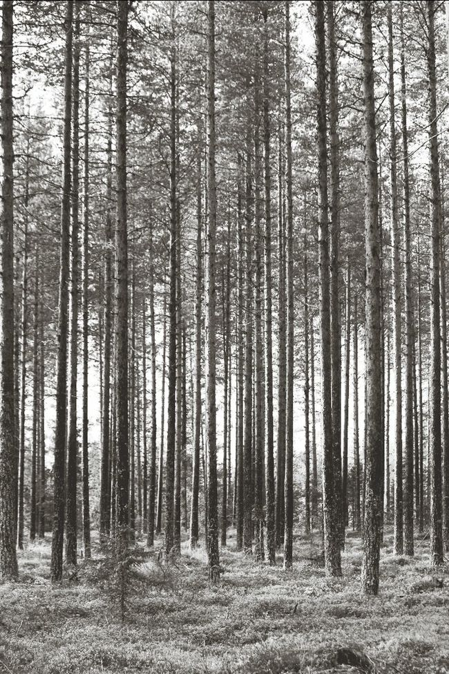 In the forest TreePorn Blackandwhite MADE IN SWEDEN Capa Filter
