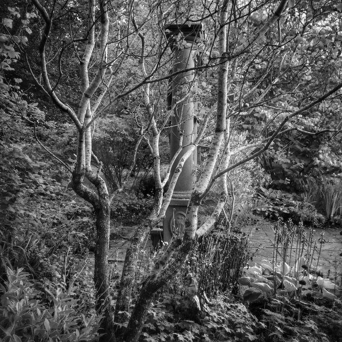 Shy Column Blackandwhite Fltrlive Flaneur Enjoying Nature