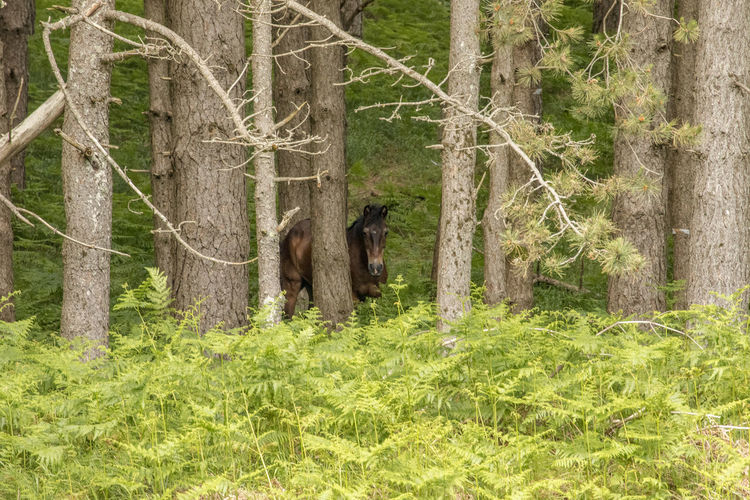 #horse Animal Themes Animal Wildlife Animals In The Wild Day Domestic Animals Forest Grass Mammal Nature No People One Animal Outdoors Tree