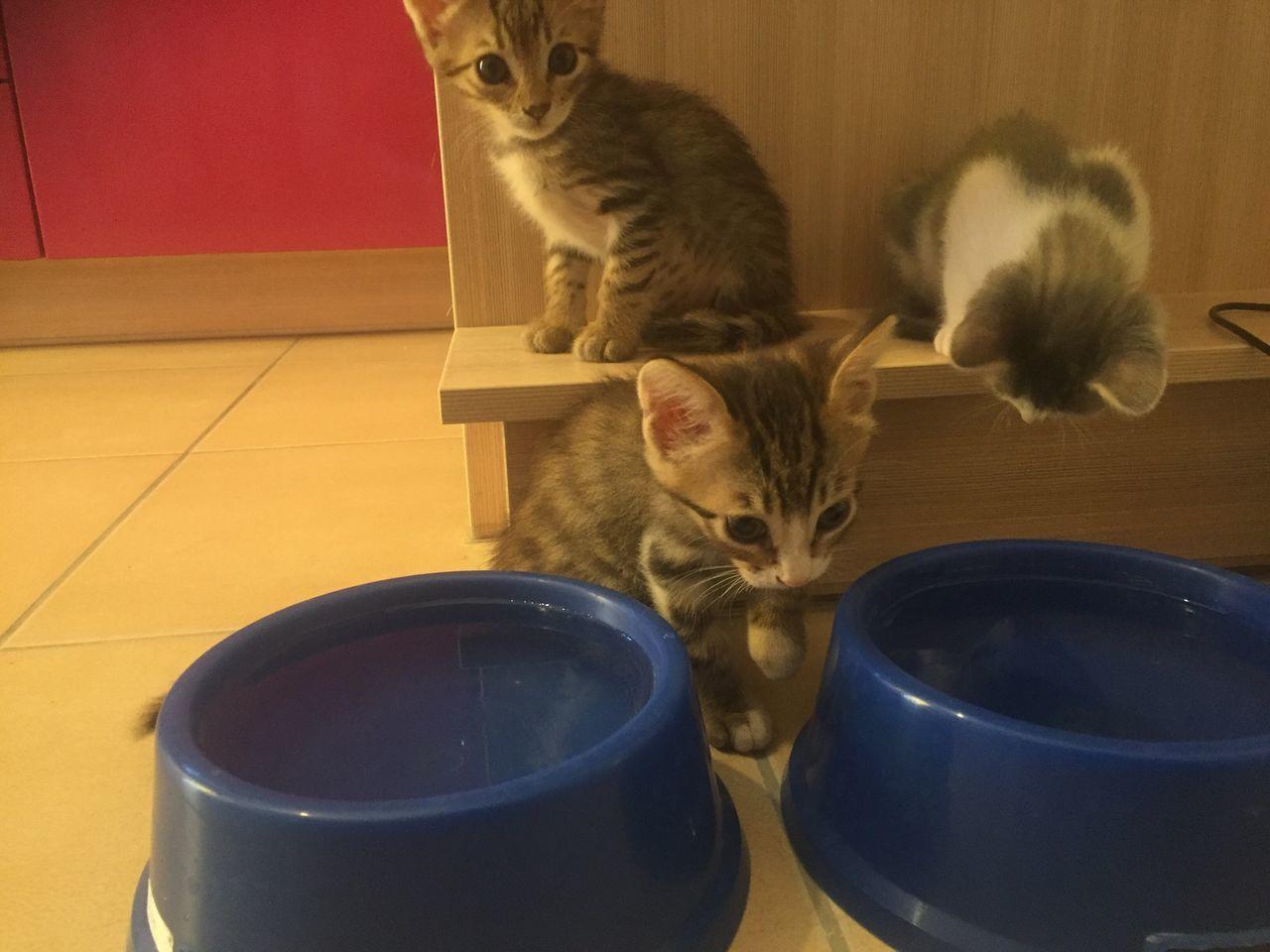 Pets Water Babycat Cat