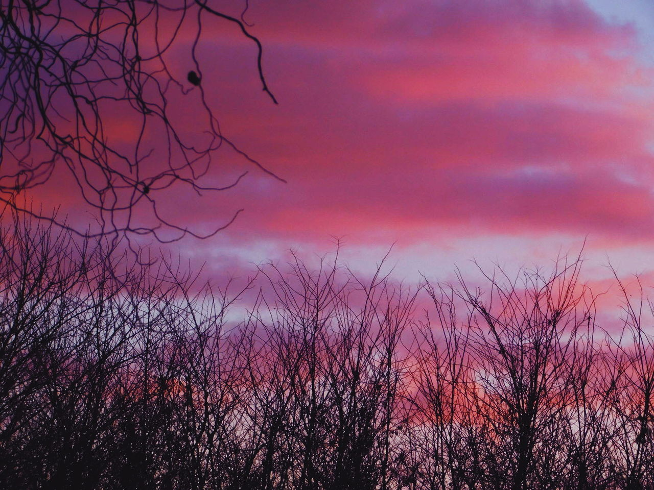 nature, beauty in nature, sky, scenics, tranquility, no people, tranquil scene, bare tree, outdoors, silhouette, tree, sunset, growth, branch, day
