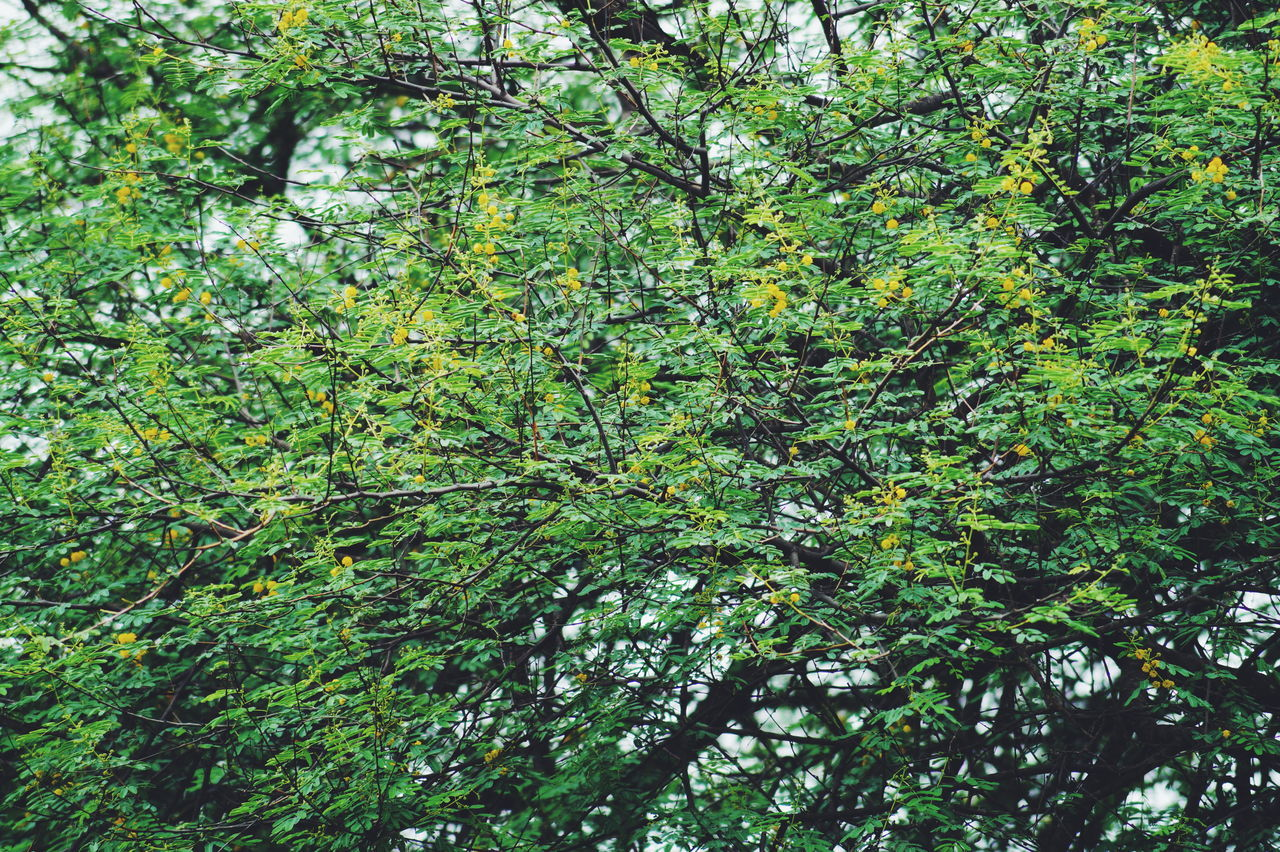 Green Color Full Frame Growth Nature Backgrounds Low Angle View Day Outdoors Tree No People Beauty In Nature Branch Close-up Freshness
