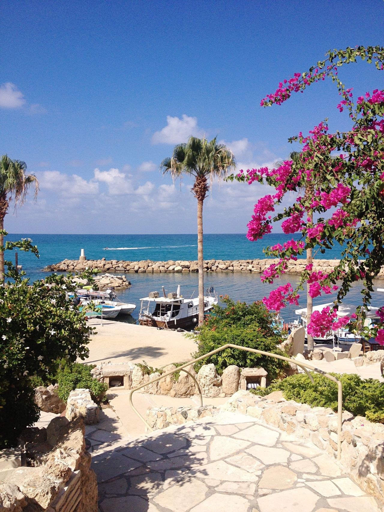 Beautiful Views. Sea Beach Palm Tree Blue Sky Sunlight Beauty In Nature Sand Shore Outdoors Water Colours Beautiful View Holiday Sunshine Cyprus Holiday Destination Harbour View Little Boat Abroad Nofilter Beauty Phoyography