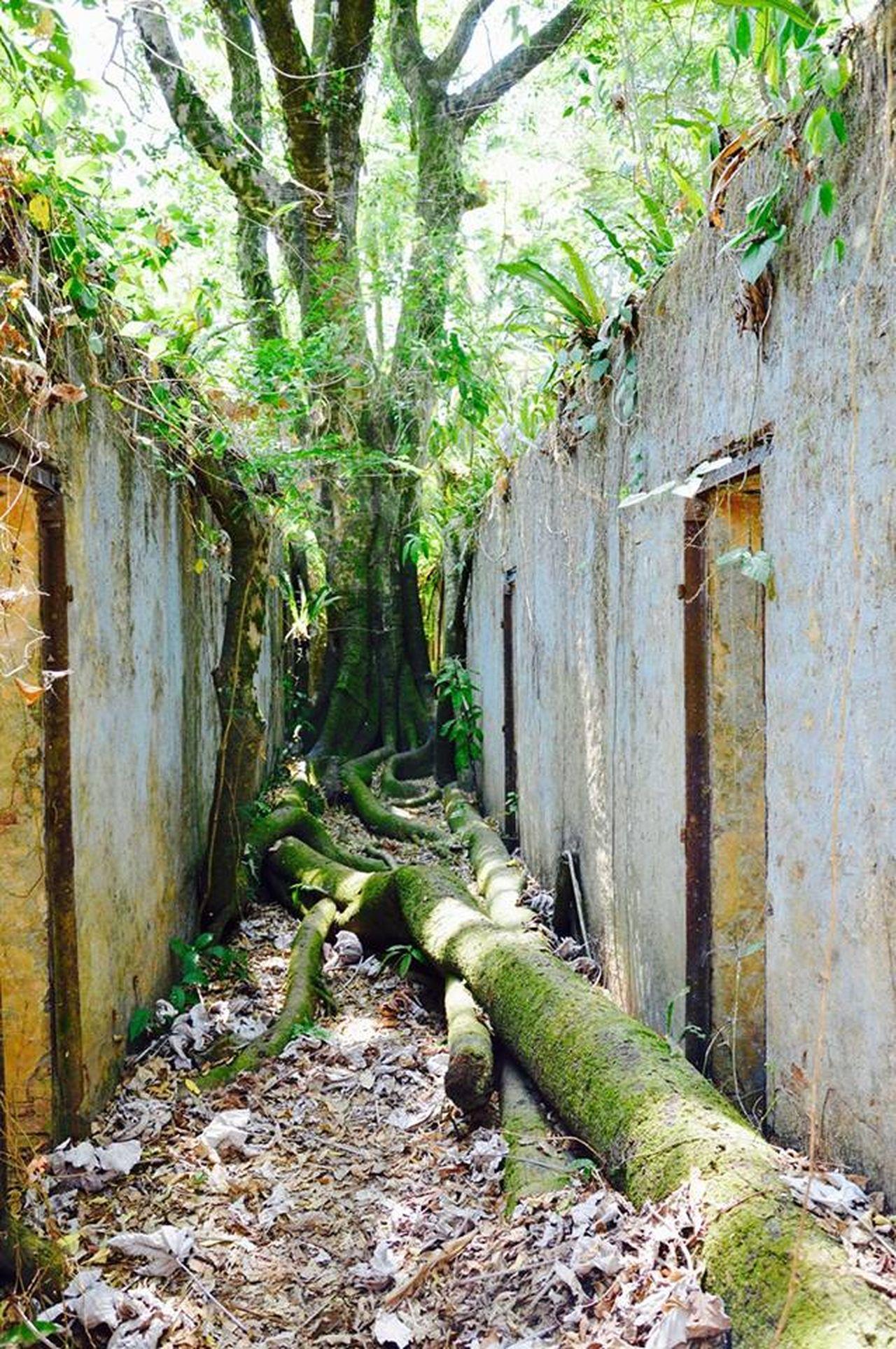 Ameriquedusud Amazonia Savage Southamerica Bagne Guyana Guyane Francaise Dangerous Ilesdusalut