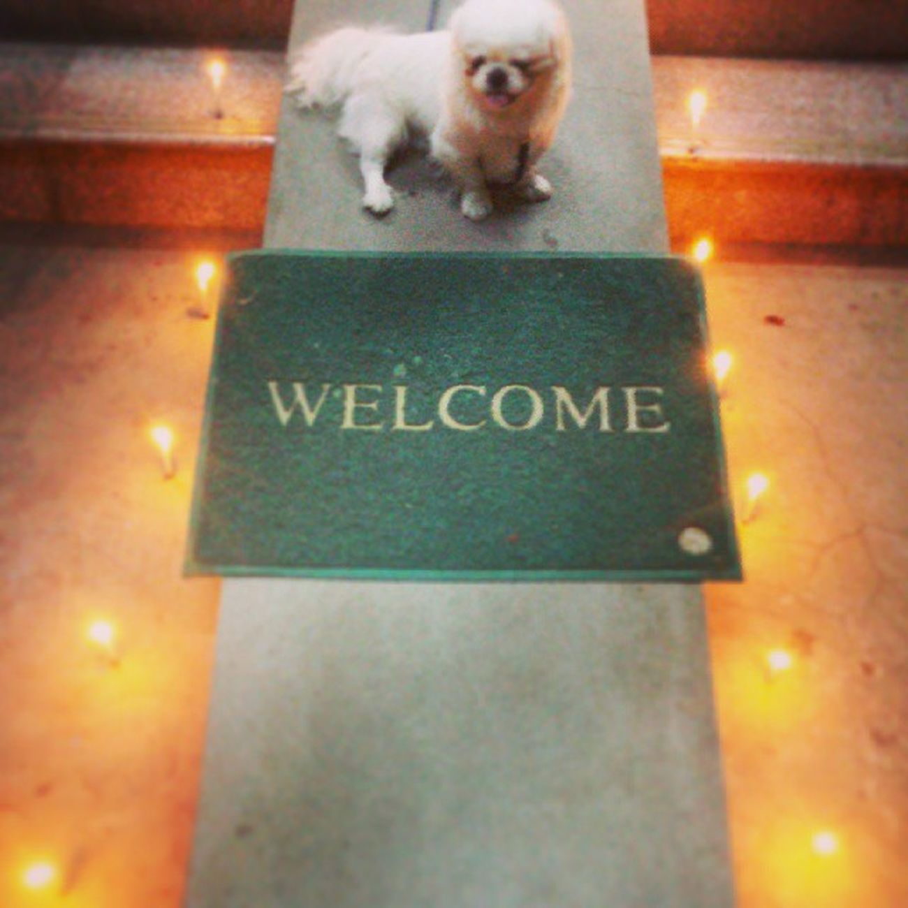 Bitoo Dog Thadingyut Candle Light Vscolovers Vscocam Vscomyanmar Ingersmyanmar Mandalay Myanmar Welcome