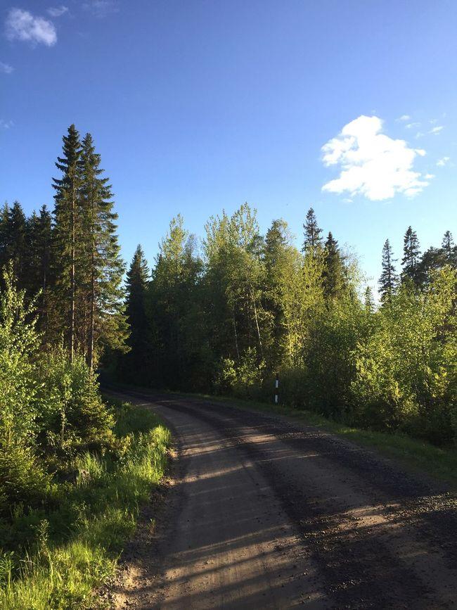 Swedish Summer Summertime Sweden Ostnäs Summer Cottage ☀️🏃🍃