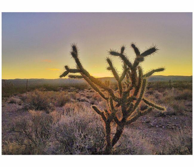Desert sunrise This Week On Eyeem EyeEm Best Shots Malephotographerofthemonth Sunrise Cactus Nature Growth Scenics Tranquil Scene Tranquility Beauty In Nature Plant Landscape Sunset No People Day Field Close-up Outdoors Desert Sky Tree