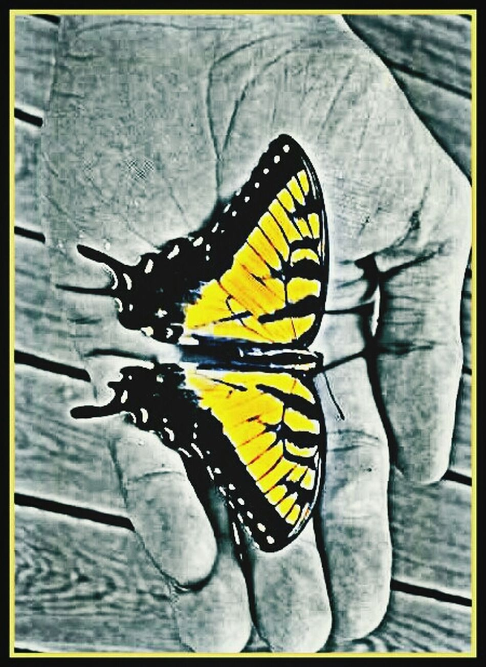 Impossib Le Moments Butterfly Encounter Abstract Pattern Pieces