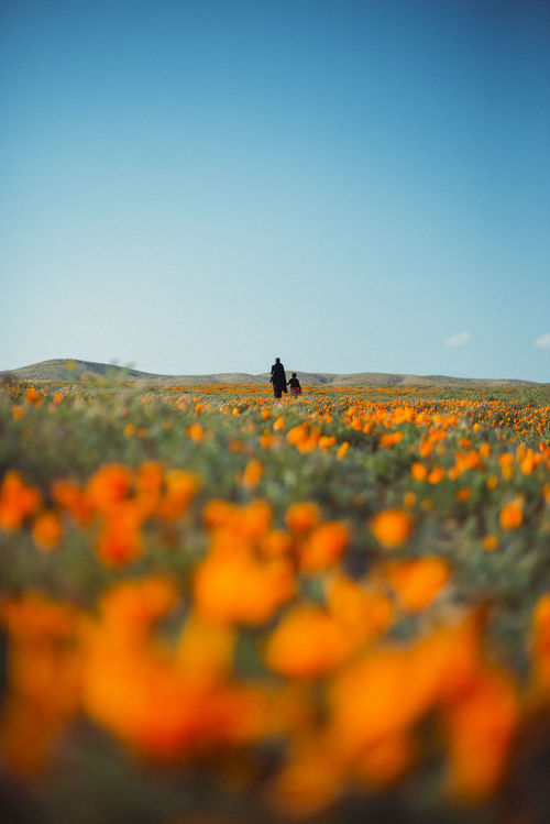 In full bloom pt.3 Beauty In Nature Blue Clear Sky Day Depth Of Field Field Flower Landscape Nature Outdoors People Sky