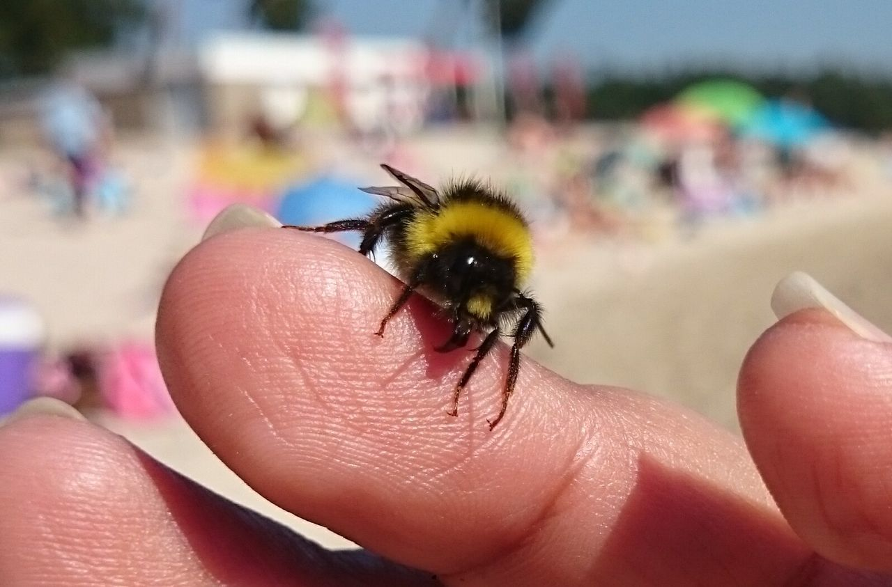 Friends with mister bumblebee
