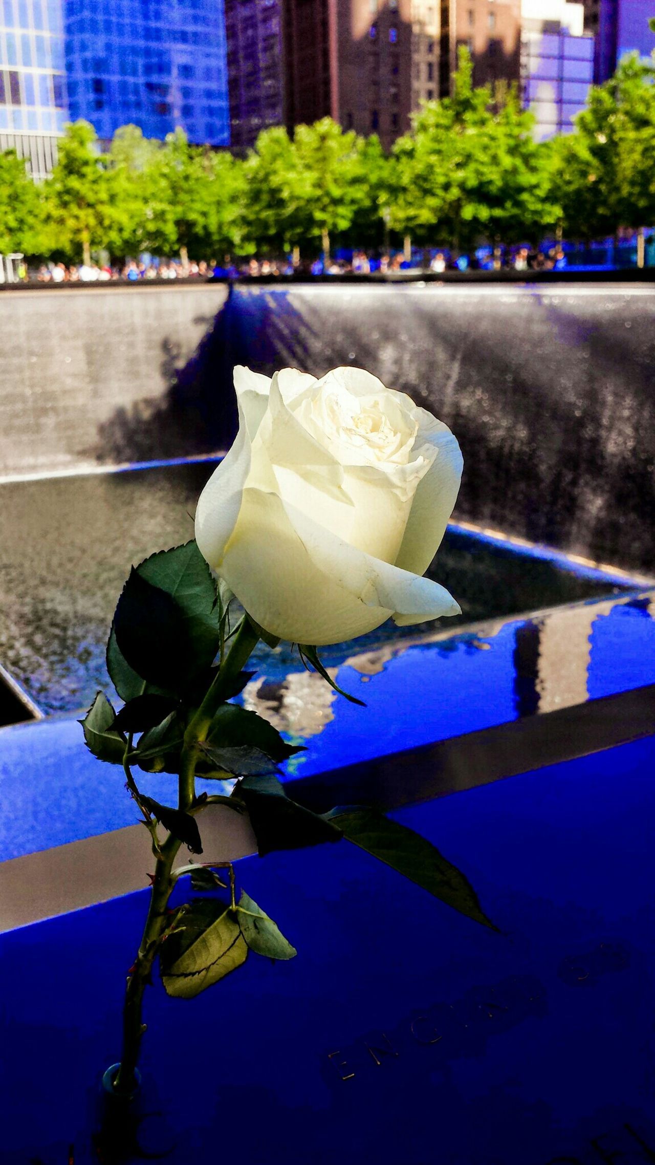 The 9/11 Memorial and Fountain In Memory Of 9/11 Victims... A White Rose was left by someone visiting. It caught my eye as the sunlight provided it with it's own special spot light.