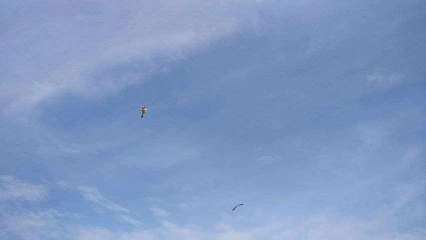 Flying Bird Mid-air Animals In The Wild Sky Animal Wildlife Low Angle View