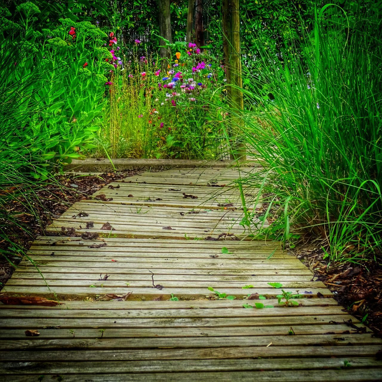nature, growth, grass, wood - material, plant, no people, outdoors, tranquility, beauty in nature, flower, day