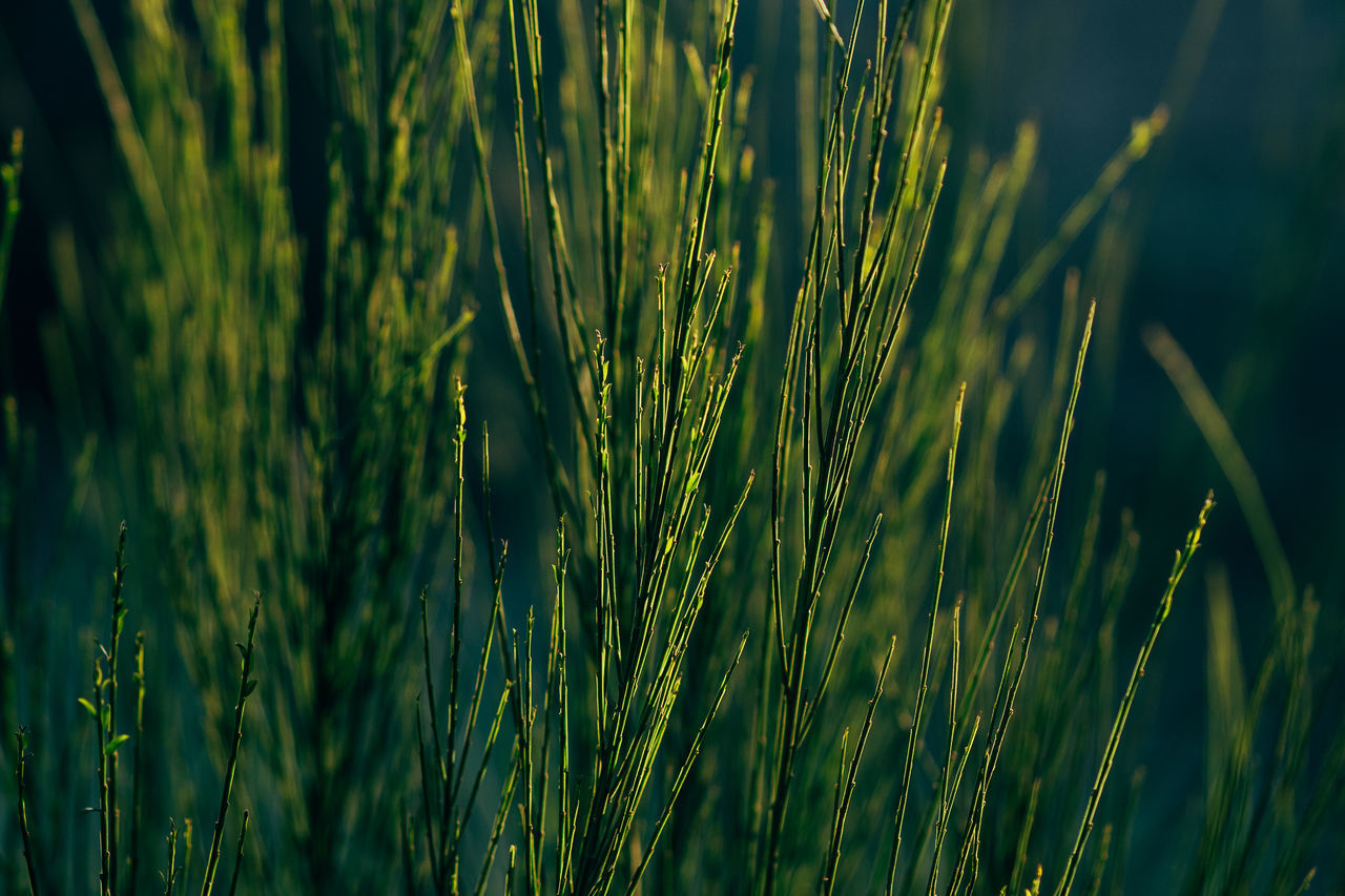 deep green Agriculture Backgrounds Beauty In Nature Cereal Plant Close-up Crop  Day Ear Of Wheat Farm Field Freshness Full Frame Grass Green Color Growth Nature No People Outdoors Rural Scene Tranquility Wheat
