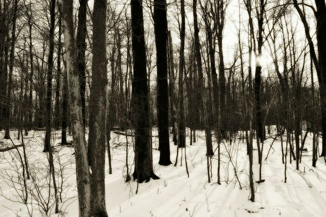 Shades Of Grey Snowy Forest Forest Twilight