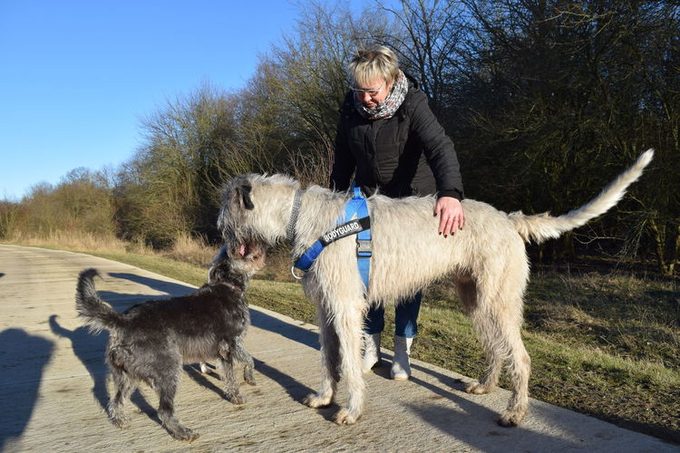 Meeting friends. : ) One Person Animal Themes Domestic Animals Outdoors People Photography Winter 2017 How Is The Weather Today? February 2017 Herrenkrugpark A Walk In The Park Dogwalk Cearnaigh Irish Wolfhound Dog Of The Day Dogs Of Winter Dogs Of EyeEm Portrait Dogslife Blue Sky Nature Evening Light Bokeh Scenics Winter
