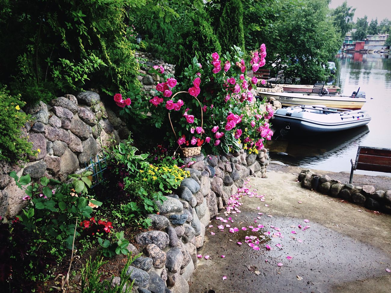 Summer Flowers Wonderful🌺🌳🚤