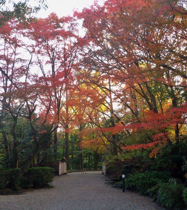 Autumn Colors Autumn Leaves Fall Beauty Fall Colors Colorful Autumn Museum Garden Kyoto Japan