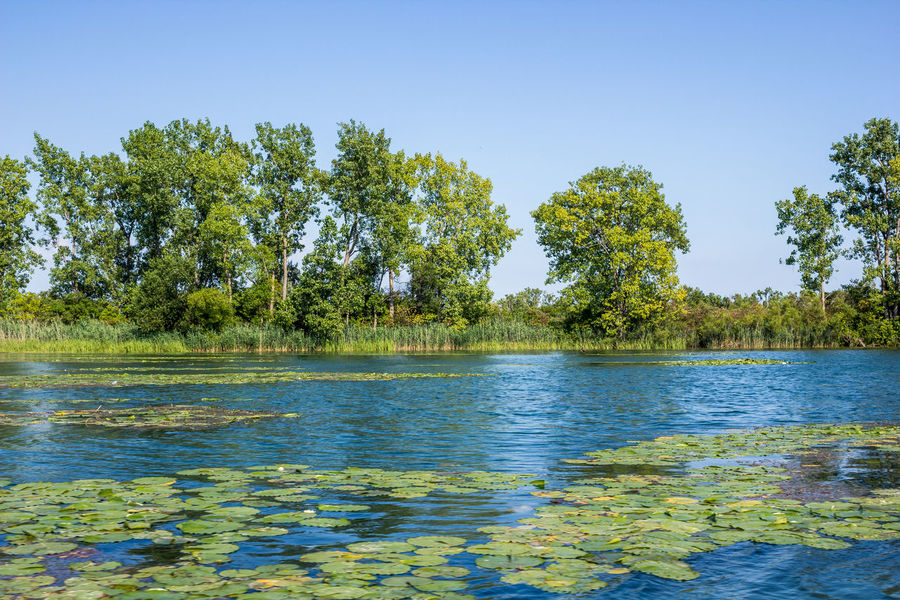 Summer greens Blue Waters Summertime Blue And Green Blue And Green Nature Lily Pads Michigan Outdoors Riverscape Water Lilies