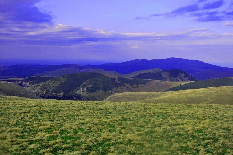 Beautiful Nature Pinus Mugo Mountain View Landscape_Collection