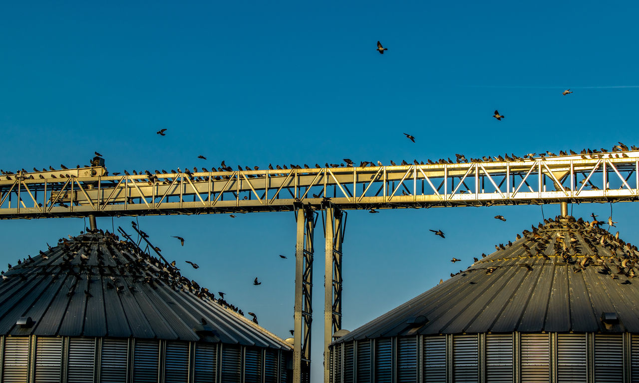 Low Angle View Of Birds Atop Built Structure