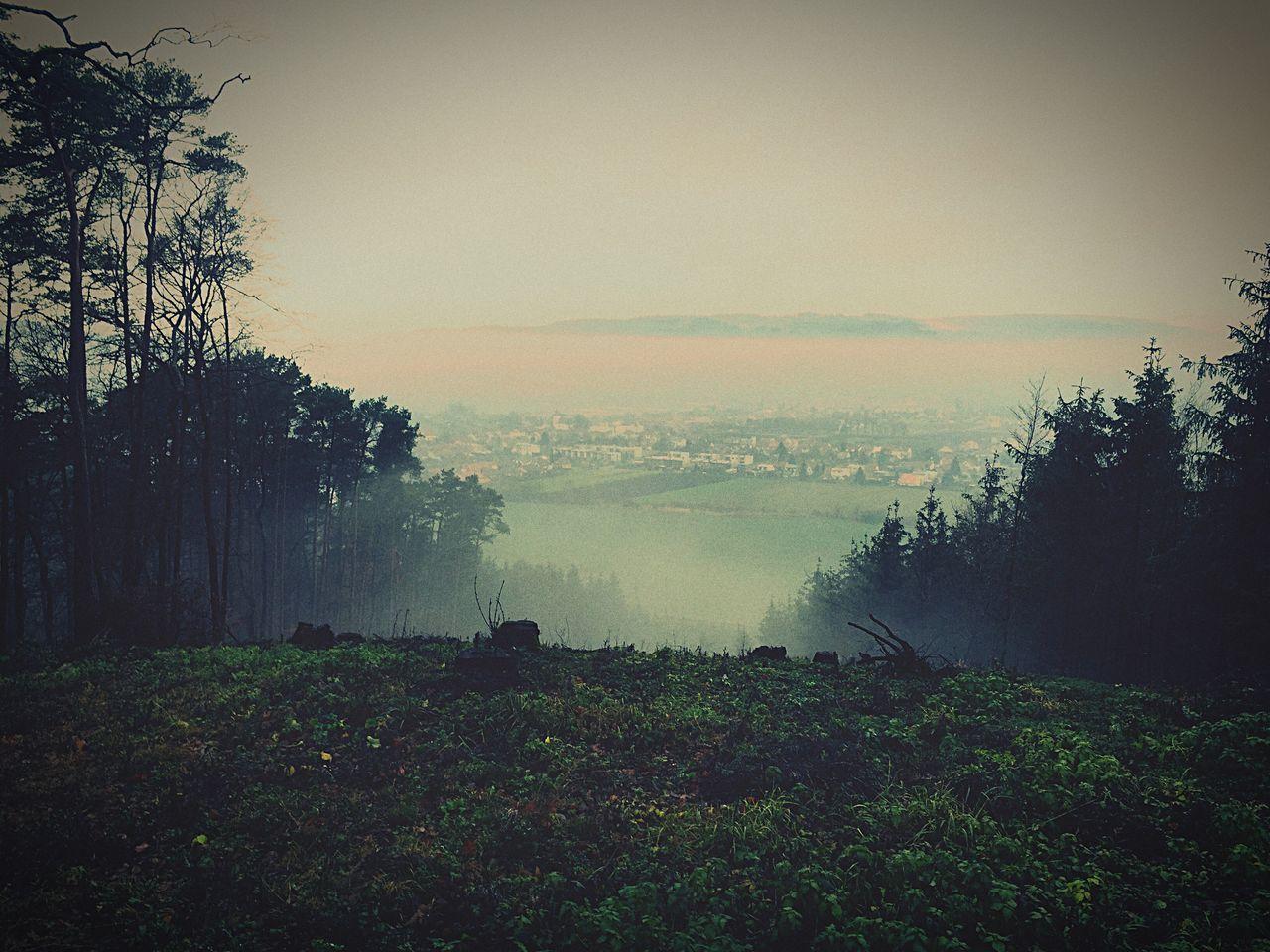 Nature Czech Republic Drásov Sightseeing Forest Fog Hill