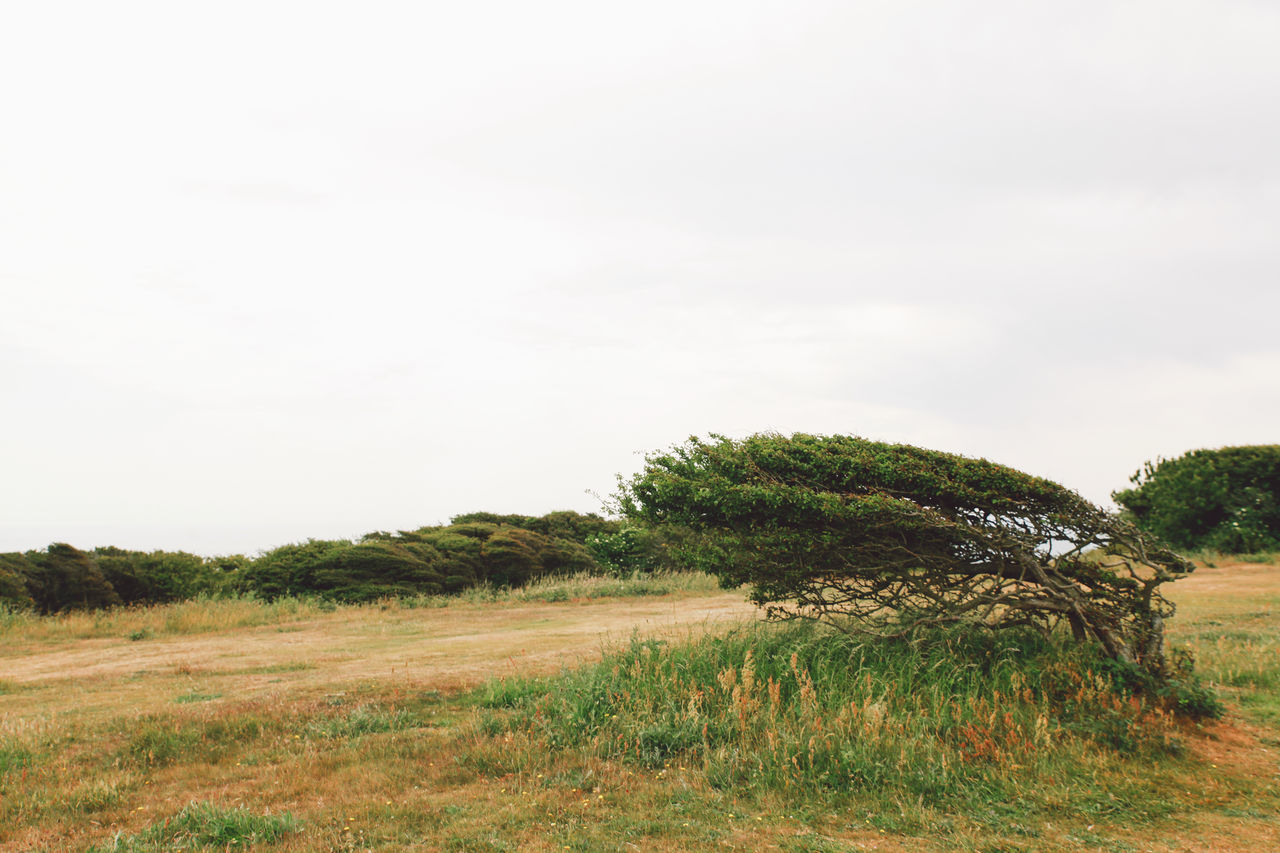 Agriculture Beach Head Beachy Head Beauty In Nature Clear Sky Copy Space Farm Field Grass Growth Landscape Nature Non-urban Scene Outdoors The Great Outdoors - 2016 EyeEm Awards The Great Outdoors With Adobe Scenics Shaped Tree Sky Tranquil Scene Tranquility Tree Tree Wind