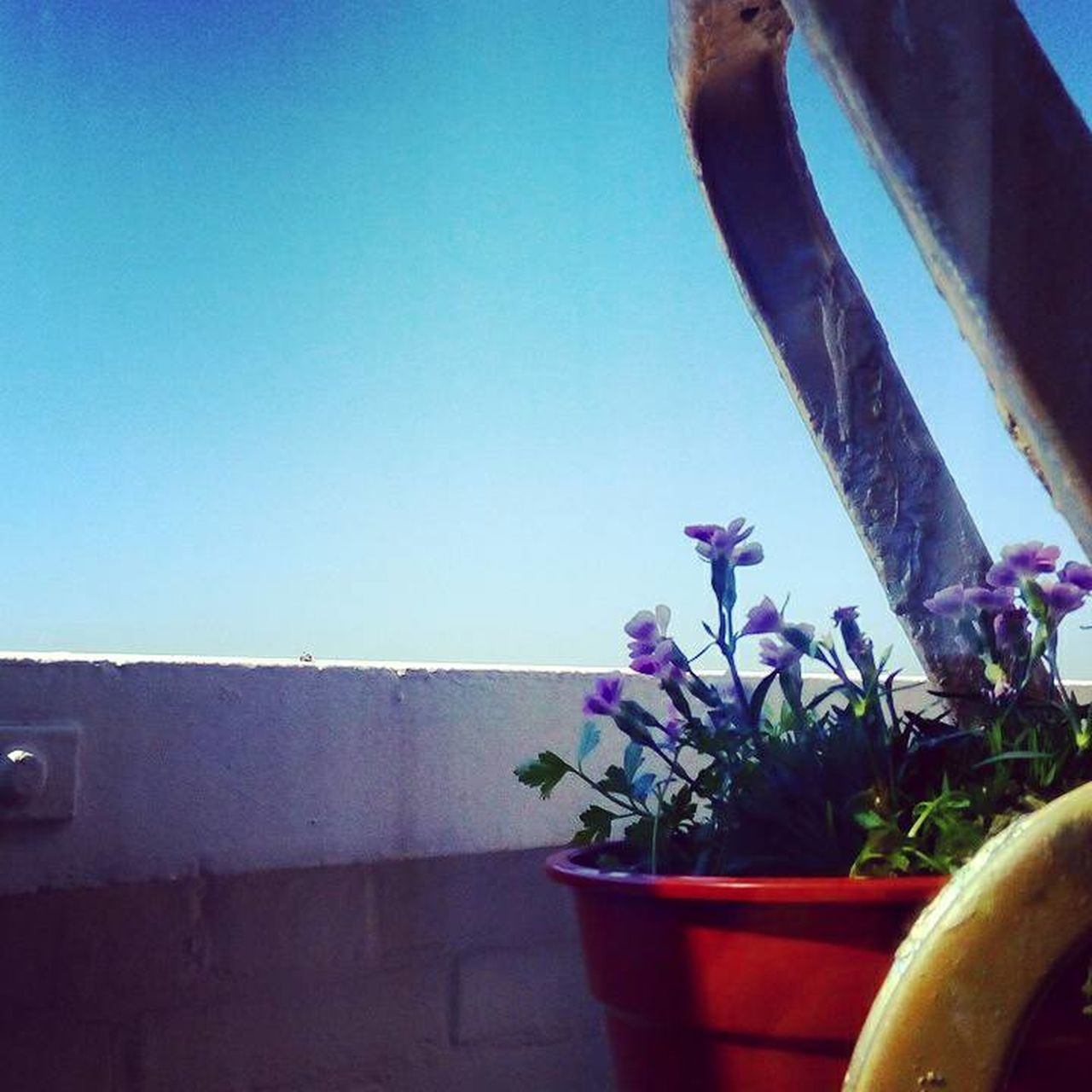 Architecture Beauty In Nature Blue City View  Clear Sky Close-up Day Flower Freshness Growth Home Horizon Over Water Nature No People Nostalgia Outdoors Plant Planting Seeds Potted Plant Sky Sodade Spring Summer The Hagye Urban Gardening
