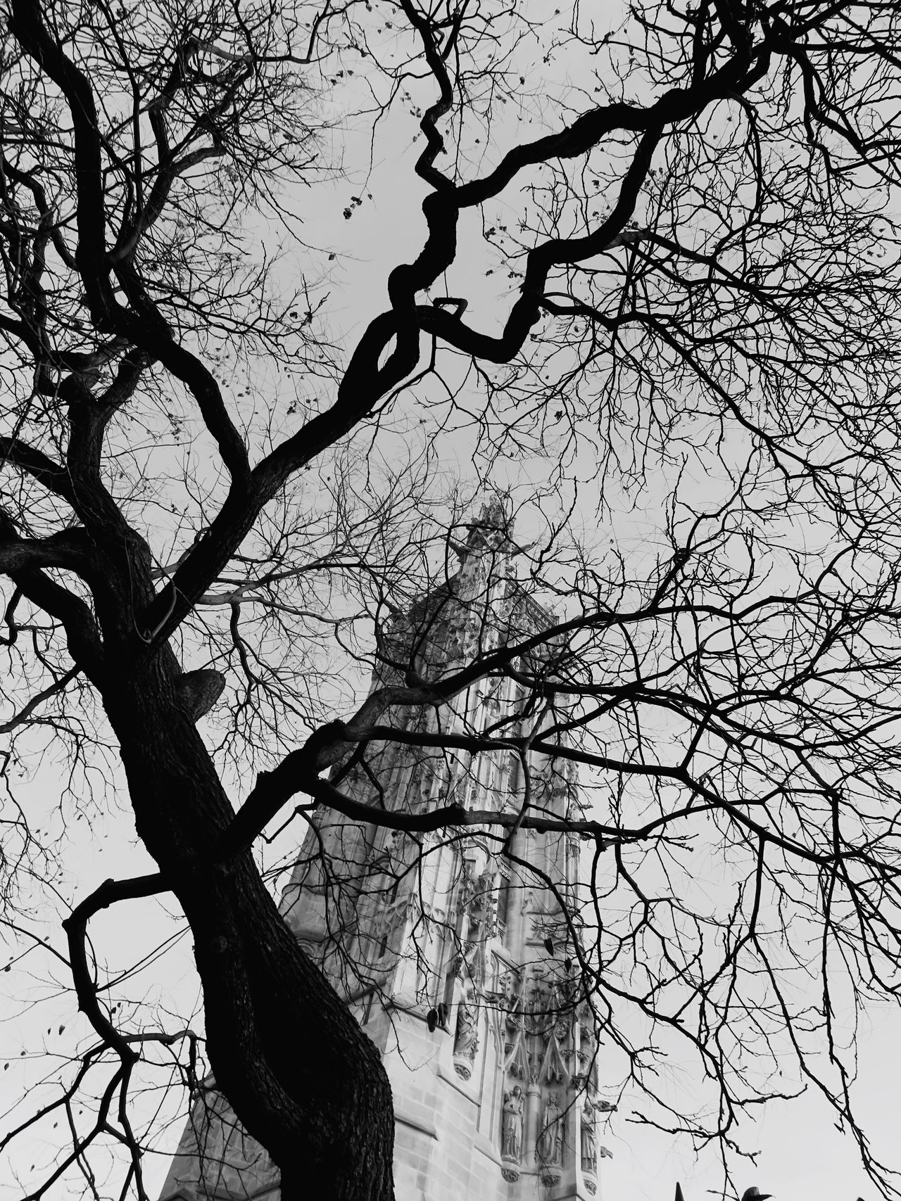 Tour Saint-Jacques Chatelet Paris Paris ❤ Paris, France  France Architecture Historical Building Historical Monuments Trees Tree TreePorn Tree Art Tree_collection  Blackandwhite Black And White Blackandwhite Photography Black And White Photography Taking Photos Streetphotography Hanging Out Showcase March