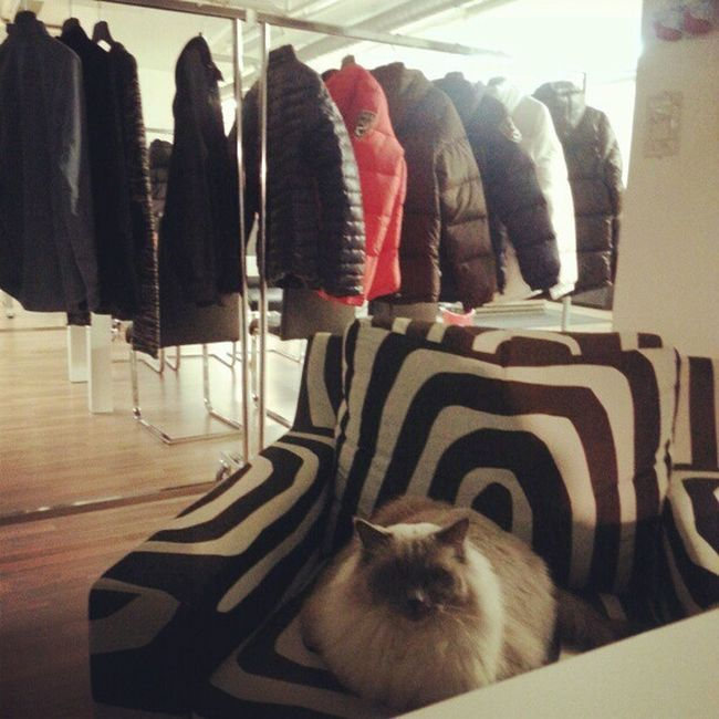 Pishi Kontor Dbrand Mode Fashion Dbrand .seJacket Blogg Cat